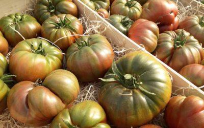 La tomate, la star de l'été !