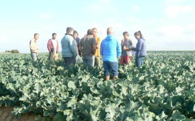 Offre d'emploi – Technicien légumes Bio et agrofournitures